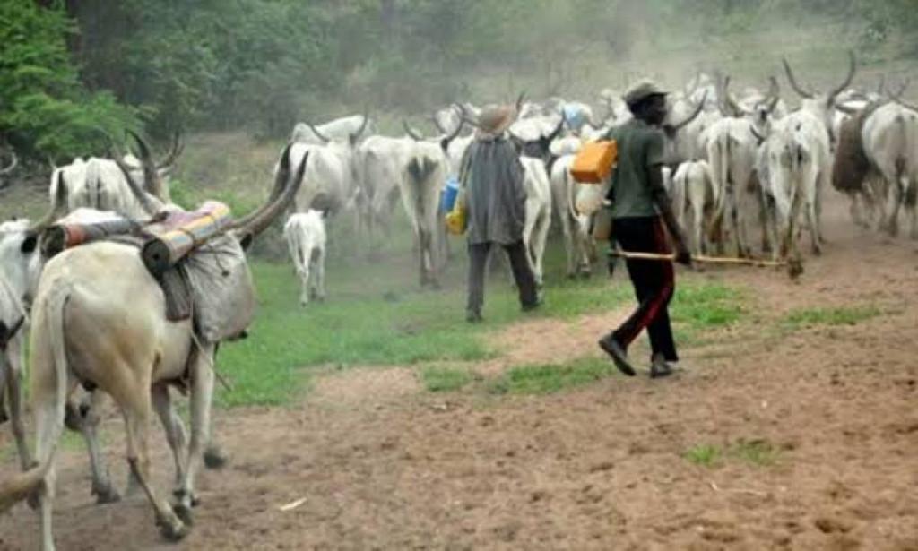 Anti-grazing Bill: Ogun Cattle-rearers have 6months period of grace
